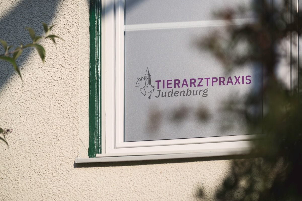 zumEgon_Tierarztpraxis-Judenburg_01